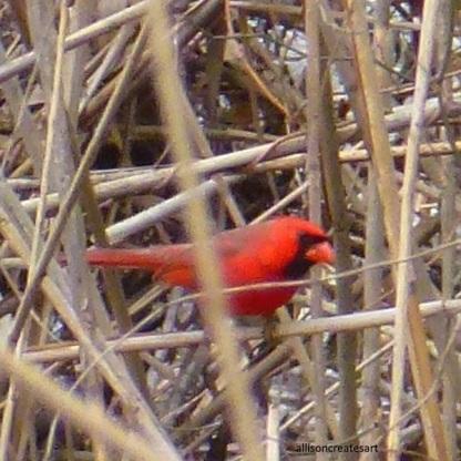 cardinal 1 edited