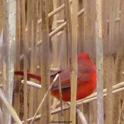 cardinal 2 edited