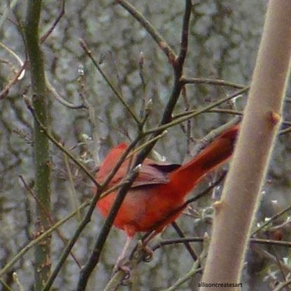 cardinal 4 edited
